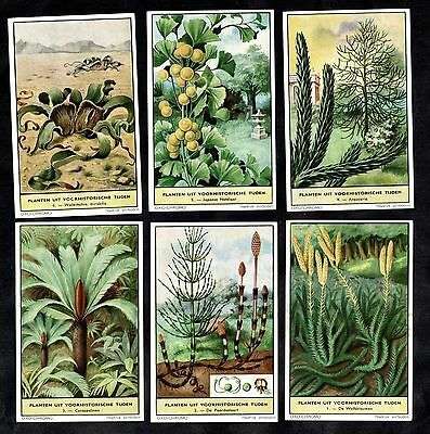 Prehistoric Plants Still Alive Today Card Set 1958 Liebig Ginkgo Horsetail Palm