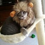 Kitschy Kitty's Treasures
