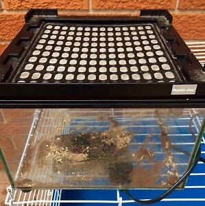 Reptile One tank with heat pad Emu Heights Penrith Area Preview