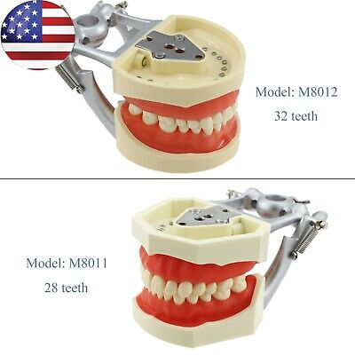Dental Kilgore Nissin 200 Typodont Model 28 32 Pcs Removable Teeth Practice Usa