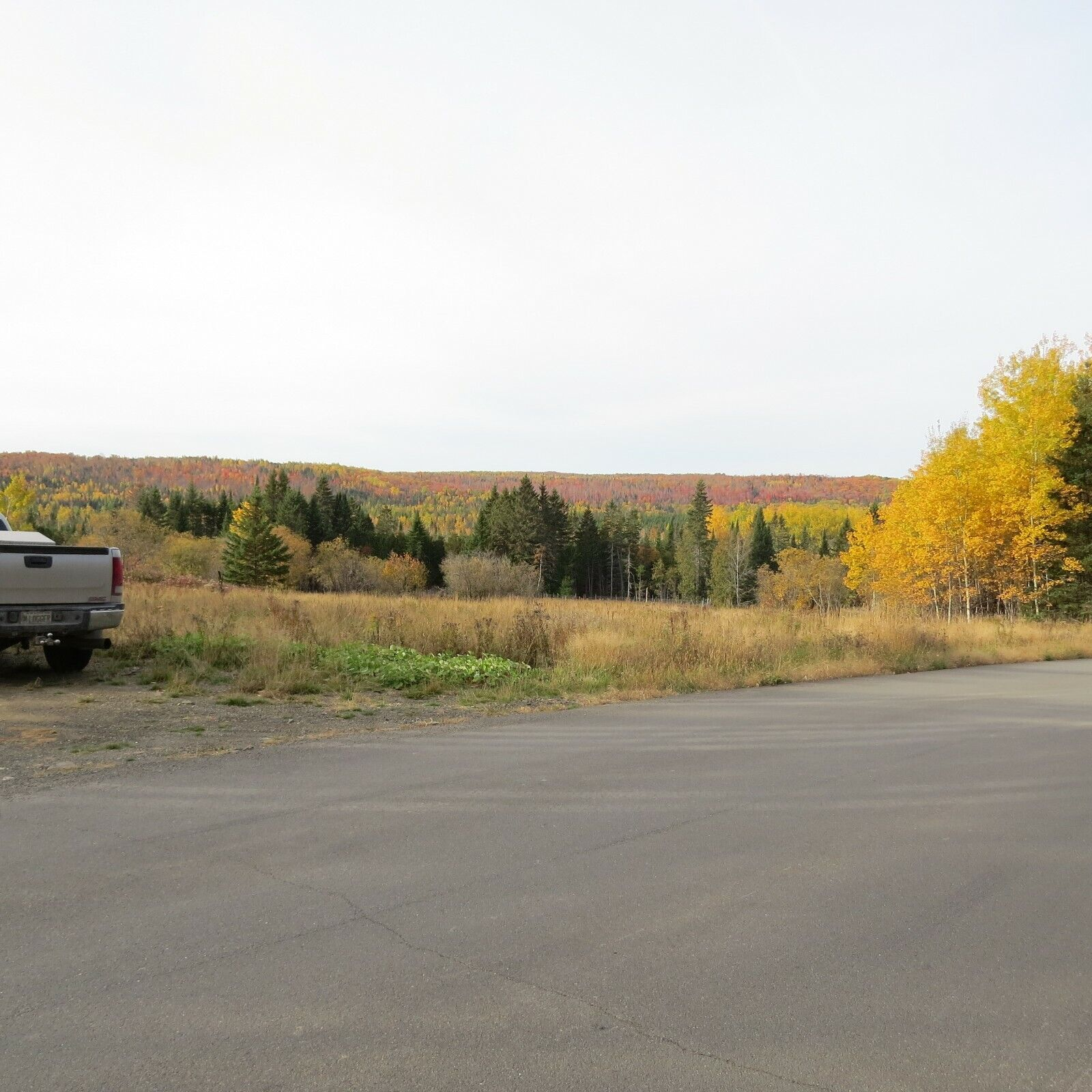 OWN 30 ACRES /- OF LAND IN NORTHERN MAINE  - $560.00