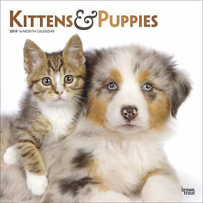 Kittens and Puppies Calendar 2019 Cats Month To View