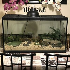 Large Boa/Large terrarium/accessories