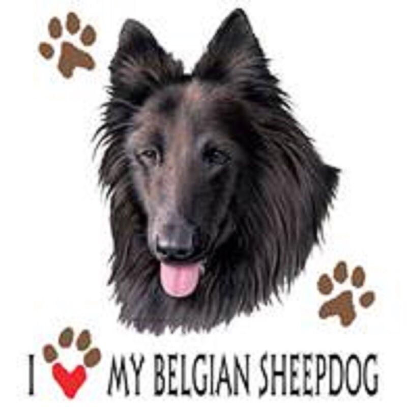 Belgian Sheeodog Love Tote