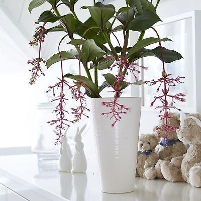 Large Stella White Ceramic Vase by Wikholm, simple elegance at its best. (Elegance At Its Best)
