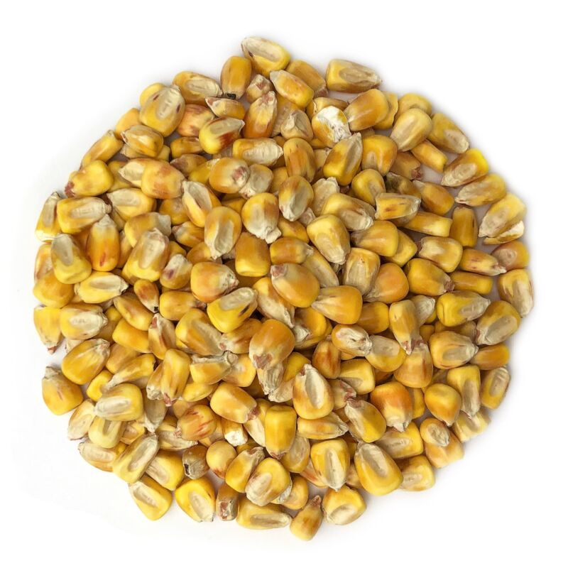 Organic Yellow Whole Corn -Non-GMO,Cleaned and Dried Kernels,Kosher-Food to Live