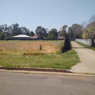 Great Investment Opportunity Leeton Leeton Area Preview