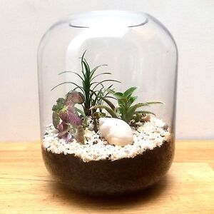 NEW Glass Terrarium With Healthy Indoor Plants & Seashell Landscape North Melbourne Melbourne City Preview