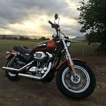 Immaculate 2011 HARLEY DAVIDSON - 1200 Custom Sportster Westmead Parramatta Area Preview