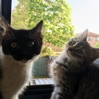 4 month old kittens free to good homes