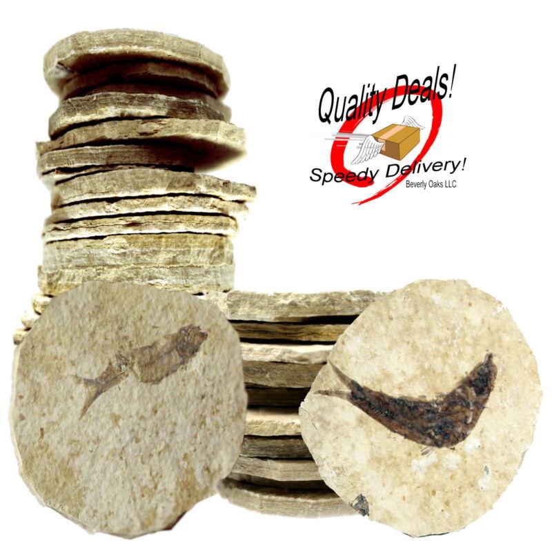 Ten 50 Million Yr Old Knightia Alta Fossil w/ Beverly Oaks COA