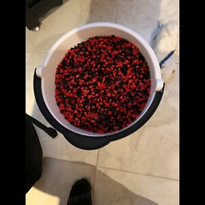 Freshwater Aquarium Coloured Gravel Black and Red