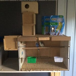 English budgies and breeding box Meadow Heights Hume Area Preview
