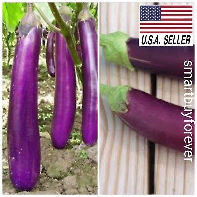 250+ LONG PURPLE EGGPLANT Seeds 2019 (all non-gmo heirloom vegetable seeds!)