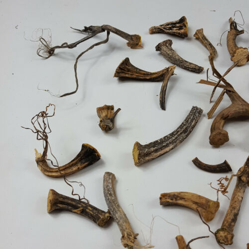 "25 Naturally Dried 1""-3"" Curly Real Pumpkin Stems Excellent Quality Velvet"