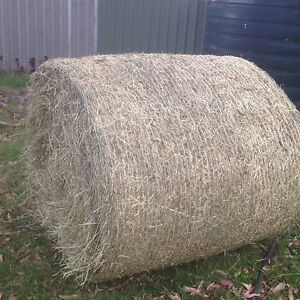 Round Bales Grassy Lucerne Bales and Clover Bales Maitland Maitland Area Preview