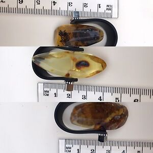 Natural Baltic Amber Rozelle Leichhardt Area Preview