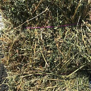 Lucerne hay Largs Maitland Area Preview