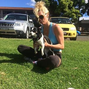 Wanted room  : Quiet Female 38 and small chihuahua Windsor Hawkesbury Area Preview