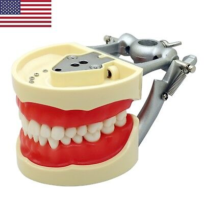 Usa Kilgore Nissin 200 Type Dental Typodont Model With Removable Teeth