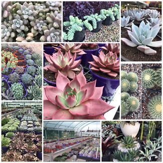 Succulent Nusery in Sydney starting from $3 , Rossmore NSW
