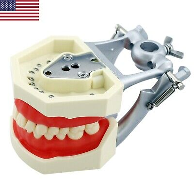 Usa Kilgore Nissin Style Dental Typodont Model With 28pcs Removable Teeth M8011