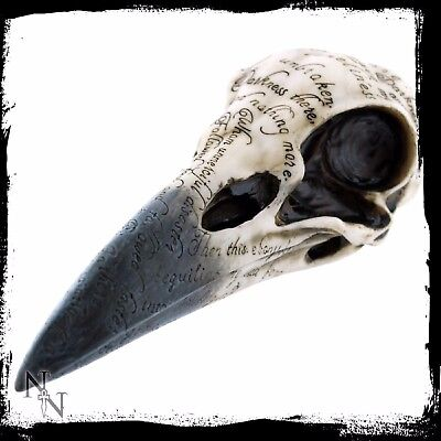 Edgars Raven Skull Inscribed Crows Head Brand New Gothic Ornament 21cm (Edgars Brands)