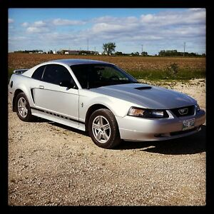 2001 Mustang - Winter Deal