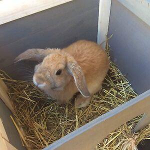Rabbit & hutch Metford Maitland Area Preview
