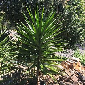 Yuccas Grays Point Sutherland Area Preview