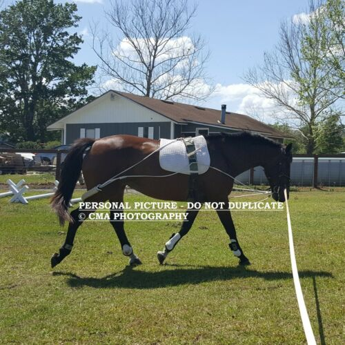NEW Horse (Equine) Lunging Training System Lunging Aid (Pessoa based)