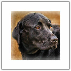 Greetings Card - Dog Black Labrador Pet Animal Nature Blank Birthday Mum Dad