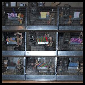 Cage Maker Needed  or Cages Wanted