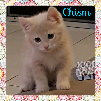Chism (Adopt me Kittens)
