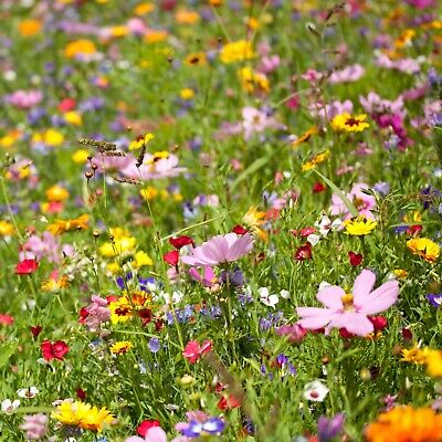 Wildflower Seed Mix Bulk 5 POUND BAG! Beautiful mix of 30+ Annual and Perennials Annual Wildflower Seed Mix