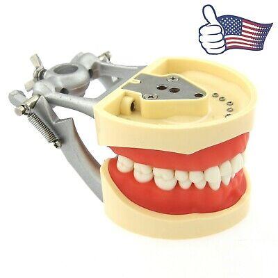 Dental Typodont Model 32pcs Removable Teeth Kilgore Nissin 200 Type Dentoform