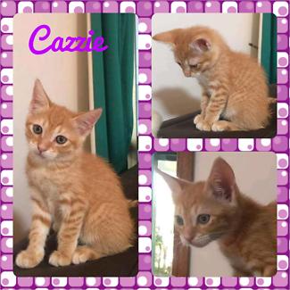 Cazzie (Adopt me Kittens)