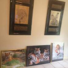 Leopard Tiger Furniture Prints FramesCushions Moving Garage Sale Helensvale Gold Coast North Preview