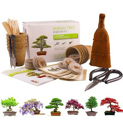BONSAI TREE KIT for beginners, Grow Your Own - Bonsai Trees, Gardening Gift Set.