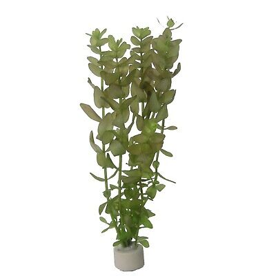 Bacopa caroliniana Bundpflanze Aquariumpflanze Großes Fettblatt Wasserpflanzen ()