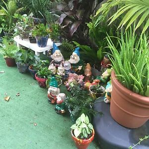 Pot plants and gnomes Gympie Gympie Area Preview