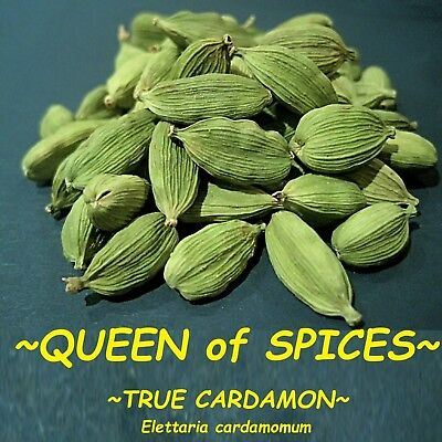 ~TRUE CARDAMON~ Elettaria cardamomum QUEEN of SPICE Awesome herb Live Potd Plant for sale  Shipping to India