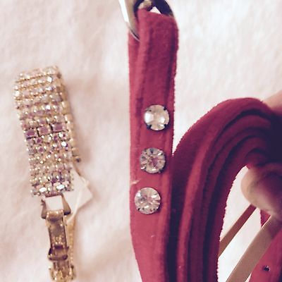 Top quality dog collar or cat collar with Rhinestones and possibly Gold Plating
