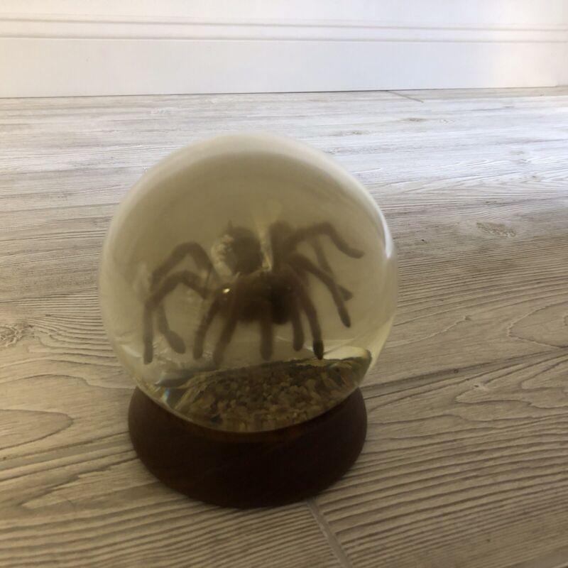 Nature Gems Educational Embedments Real Tarantula In Globe