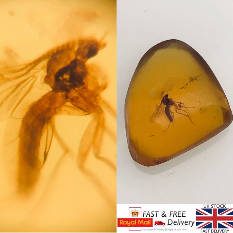 Jurassic Park Like Mosquito In Cretaceous Burmese Amber Fossil .69g *409