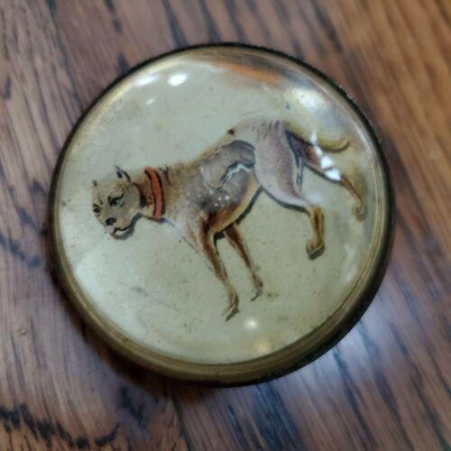 Vintage Bridle Rosette Single Brass Glass Dome Antique Full Length Pitbull Dog