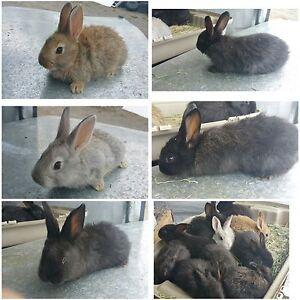 Mountian peak rabbitry has rabbits available