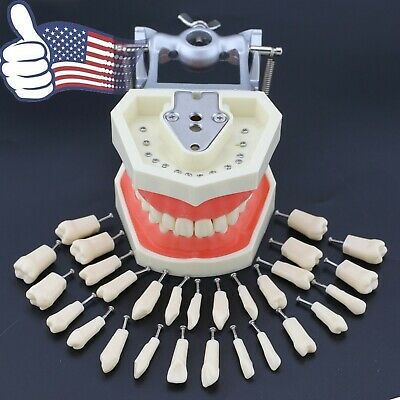 Us Kilgore Nissin 200 Compatible Dental Typodont Practice 28pcs Removable Teeth
