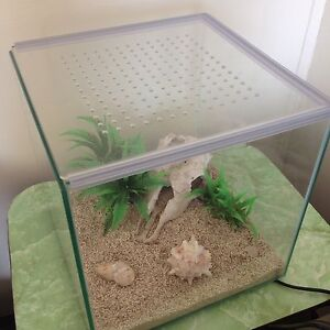 EVERYTHING YOU NEED TO RAISE HAPPY HERMIT CRABS Kensington Norwood Area Preview