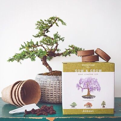 Nature's Blossom Bonsai Tree Starter Kit - Grow 4 Types of Bonsais from Seed